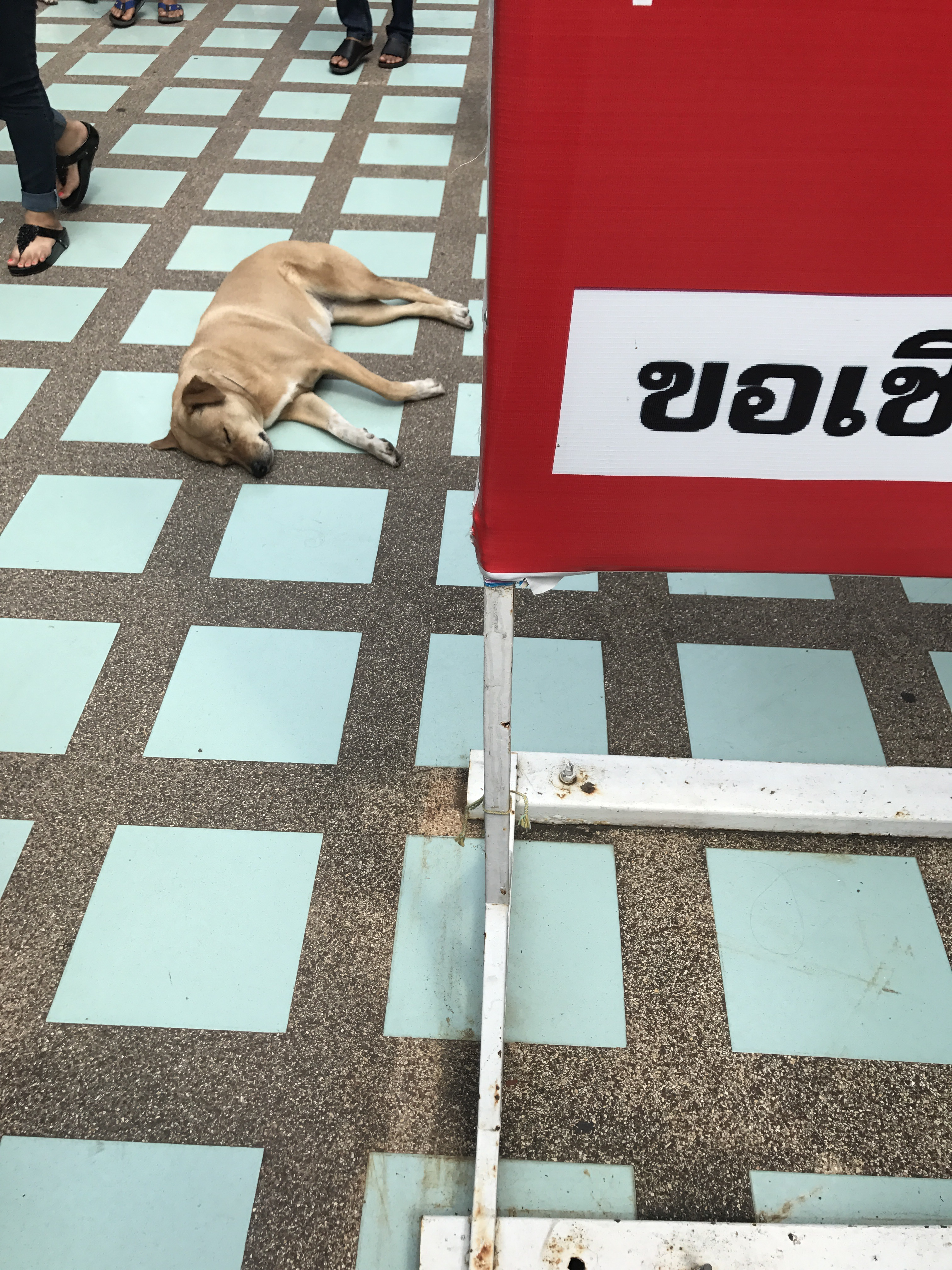 タイののんびりワンコ、ニャンコ達
